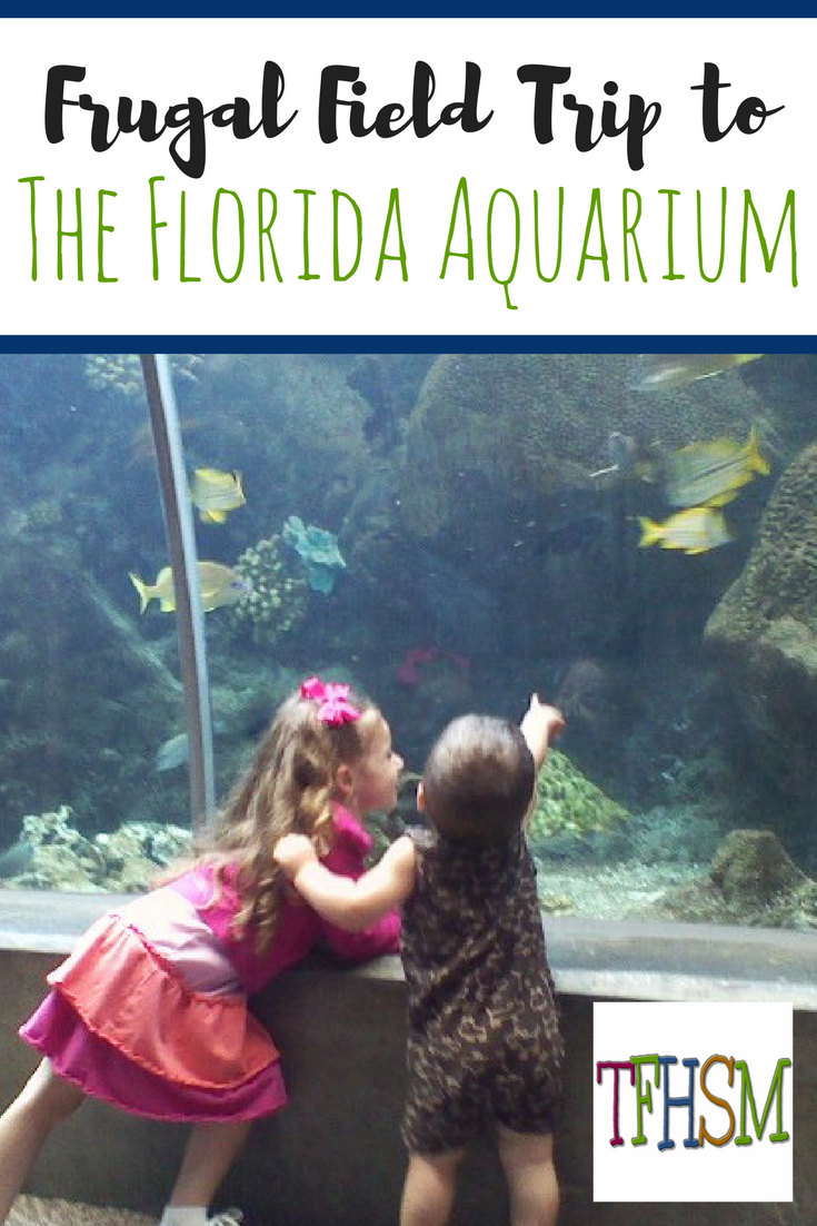 Frugal free educational field trip to The Florida Aquarium at Tampa