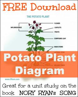Nory Ryan's Song Potato Plant Unit Study